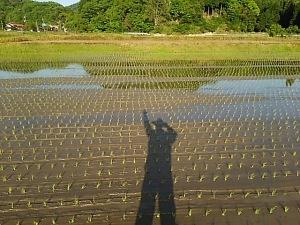 田んぼの人影